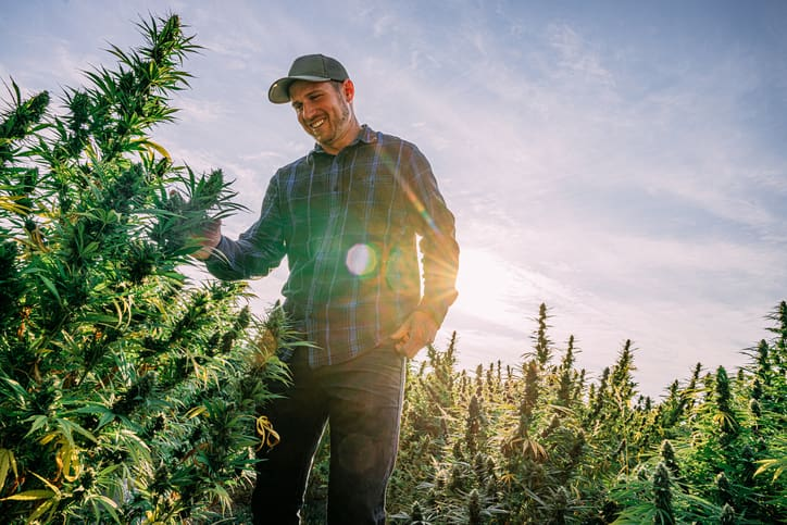 Protection and Peace of Mind for Your Cannabis Business